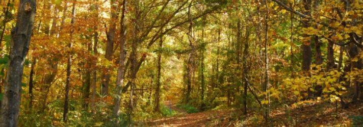 Three Tips on Picking Rural Land