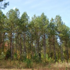 The State of South Carolina's Forests