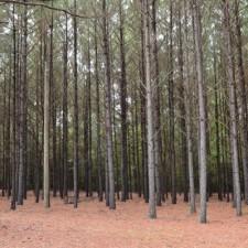 South Carolina's Forests