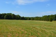 24 Acres Pasture With Pond Near Amazon No Restrictions For $11,900/ac