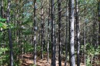 61 Acre Timberland/Recreational Tract