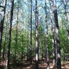 31 Acre Timberland/Recreational Tract