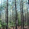 15 Acre Timberland/Recreational Tract