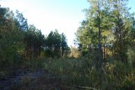 Recreational Tract Adjoining Sumter National Forest