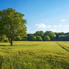 Three Benefits to Purchasing Land
