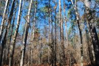 78 Acre Recreational Tract With Lots Of Mature Hardwoods