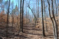 28 Acre Tract With Lots Of Mature Hardwoods