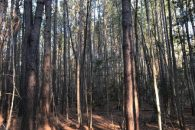 26 Acre Timberland/Recreational Tract