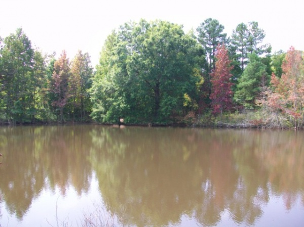 22 Acres With Pasture And Large Pond Near I-85 And Gaffney