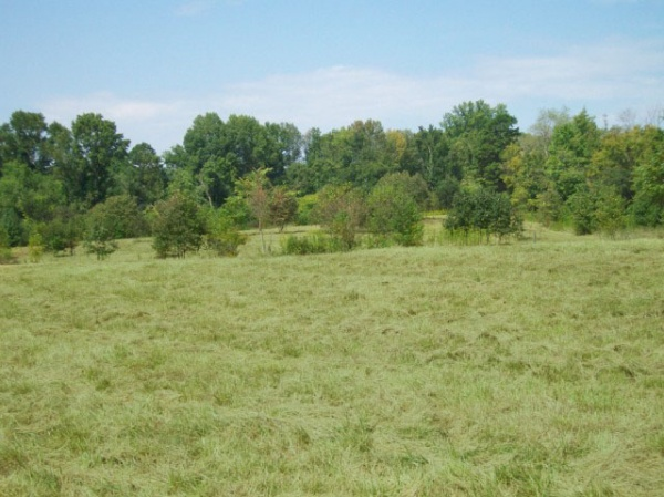 22 Acres With Pasture And Large Pond Near I-85 And Gaffney | Metcalf