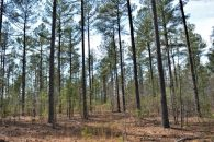 36 Acre Residential Development Tract In Boiling Springs