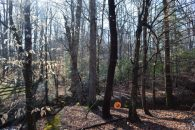 26.95 Acres Between Campobello & Gowansville