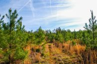 46 Acre Recreational/Timber Tract In Union County