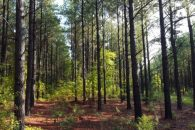 108 Acre Recreational Timberland Investment Tract