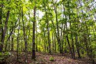 12 Acre Wooded Homesites Near Landrum