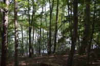 27.22+/- Acres With Nearly 850+/- Feet Of Frontage On Pacolet Reservoir #1