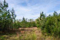 16 Acre Timber/Recreational Tract Near Jonesville, SC