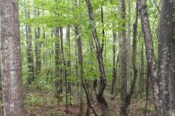 21.5 Acres In Northern Greenville County