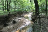 60 Acre Recreational Tract with Mature Hardwoods