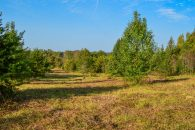 6.37 Acres In Holly Springs