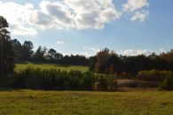 75+/- Acres In Jonesville With 2 Ponds