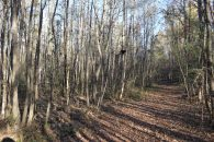 11+/- Acre Unrestricted Tract On Ben's Creek Near Highway 101