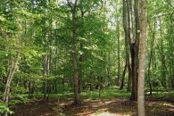 Rare 19 Acre Wooded Tract In City Of Union