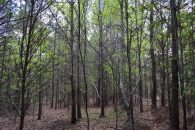 33.3 Acres Near Intersection Of Highway 101 & US 221 at 14 Sloan Lake Rd, Woodruff, SC 29388, USA for 249750