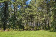 12 Acre Wooded Home Site Near Moore