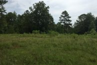 Unspoiled Land In Desirable Little River Area