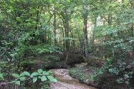 REDUCED!! 84+/- Acres Prime Recreational Land Near Spartanburg & Woodruff