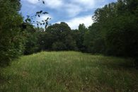 90+/- Acre, Farm With House, Beautiful Land & Lots Of Wildlife