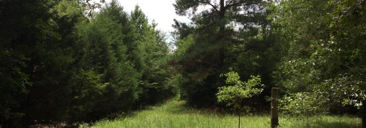 What Should You Know About Buying Timberland Property?