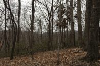Private 10+/- Acre Homesite and Nature Preserve Near Mountains