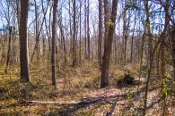 Wooded Homesite In School District 7