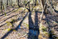 21.8 Acre Wooded Tract Near Green Creek NC