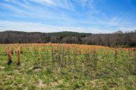 18.37 Acre Mini Farm Convenient To Spartanburg & Greenville
