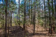 29+/- Acres in Woodruff