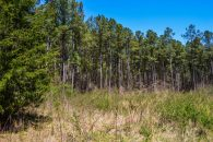 7+/- Acre Homesite in Woodruff