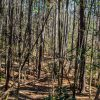 29+/- Acre Recreational Parcel in Woodruff