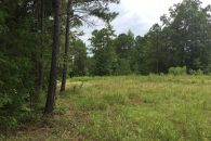 Abbeville 51+/- Acre Land with Park Creek Frontage