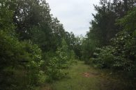 40+/- Acres Wood Land in Abbeville