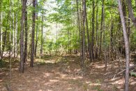 19 Acre Wooded Tract in Union County