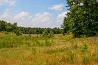 PRICE REDUCED!! 26 Acre Hunting Tract in Union County