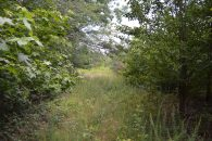 39.66 Acres Near Cooley Springs