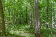 5 Acre Wooded Homesite in Jonesville at Parks Farm Rd, South Carolina 29353, USA for 24900