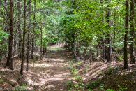 43 Acre Wooded Tract in Union County