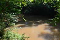 3.41 Acres on the South Tyger River