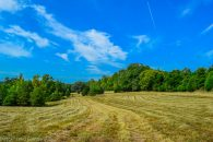 12 Acre Riverfront Property in Pauline at Harrelson Rd, South Carolina 29374, USA for 13900