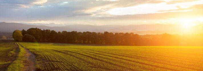 Avoid These Mistakes When Purchasing Rural Land